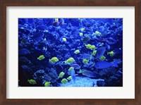 Maui Ocean Center Maui Hawaii USA Fine Art Print