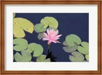 The Lotus Eaters I Fine Art Print