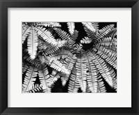Fern IV Fine Art Print