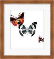 Butterflies Dance III Fine Art Print