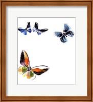 Butterflies Dance VII Fine Art Print