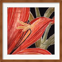 Red Amaryllis With Stem Fine Art Print