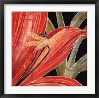 Red Amaryllis With Stem Fine Art Print