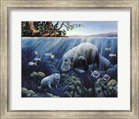 Manatee And Calf Fine Art Print