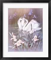 Swans With Waterlilies Fine Art Print