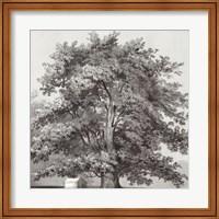 Silver Majesty II Fine Art Print