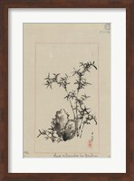 Rock and Bamboo in Garden Fine Art Print