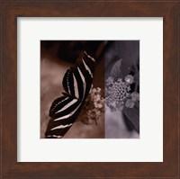Butterfly Study IV Fine Art Print