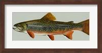 Brook trout Fine Art Print