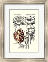 Tinted Floral I Fine Art Print