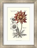 Tinted Floral III Fine Art Print