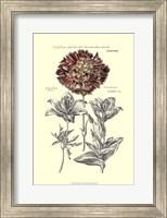 Tinted Floral IV Fine Art Print