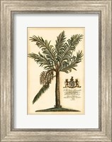 British Colonial Palm II Fine Art Print