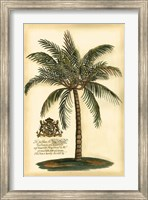 British Colonial Palm III Fine Art Print