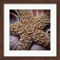 Macro Shells I Fine Art Print