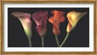 Jewel Calla Lilies Fine Art Print