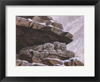 Snow Leopards Fine Art Print