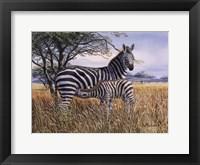 Zebra and Foal Fine Art Print