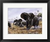 Elephant Warning Fine Art Print