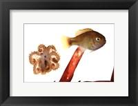 Tidepool Discoveries IV Fine Art Print