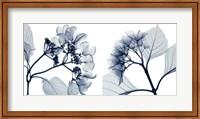 Hydrangeas [Positive] Fine Art Print
