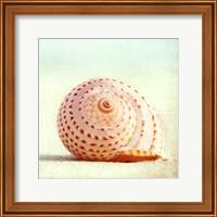 Seashell Voices Fine Art Print