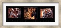 Nature's Kingdom-Tigers Fine Art Print