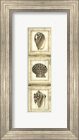 Small Rustic Shell Panel I Fine Art Print