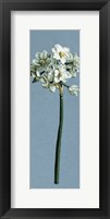 Chinese Sacred Lily Fine Art Print