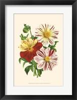 Bountiful Bouquet III Fine Art Print