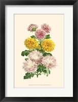 Bountiful Bouquet V Fine Art Print