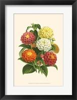Bountiful Bouquet VI Fine Art Print