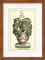 Antique Munting Aloe II Fine Art Print
