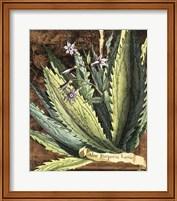 Graphic Aloe II Fine Art Print