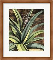 Graphic Aloe III Fine Art Print