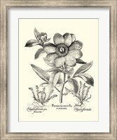 Black and White Besler Peony I Fine Art Print