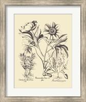 Black and White Besler Peony IV Fine Art Print