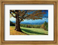 Blue Ridge Beauty Fine Art Print