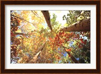 Forest Canopy Fine Art Print