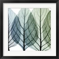 Celosia Leaves I Fine Art Print