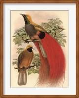 Scarlet Bird of Paradise Fine Art Print