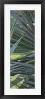 Fan Palm II Fine Art Print