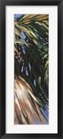 Wild Palm II Fine Art Print