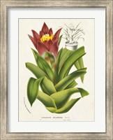 Tropical Bromeliad II Fine Art Print