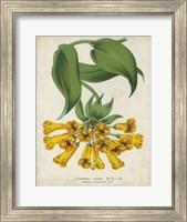Tropical Array II Fine Art Print