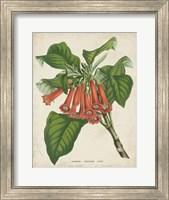 Tropical Array VI Fine Art Print
