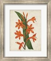 Tropical Array VIII Fine Art Print