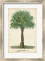 Palm of the Tropics I Fine Art Print