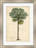 Palm of the Tropics II Fine Art Print