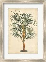 Palm of the Tropics III Fine Art Print
